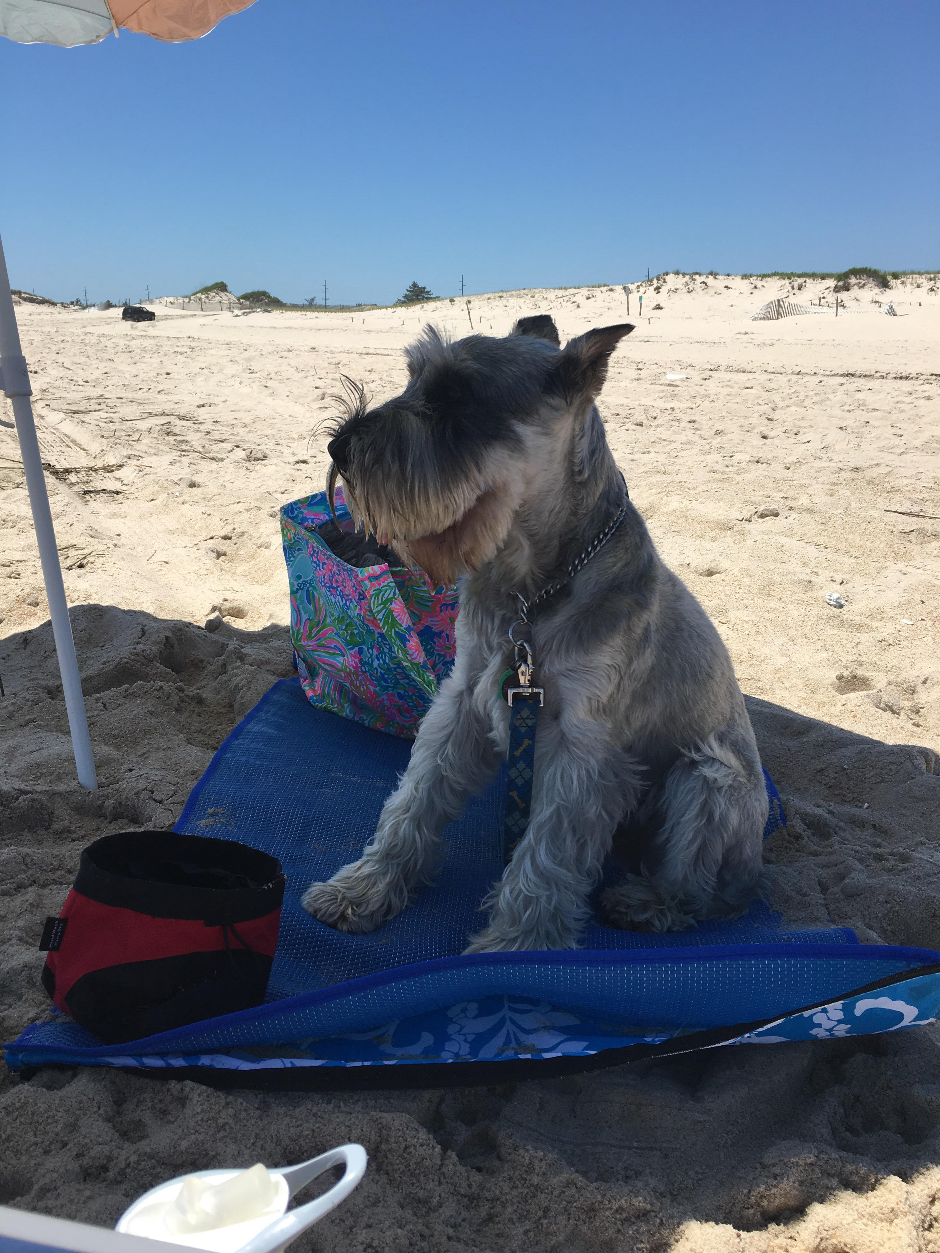 Dog Beach Near Rehoboth